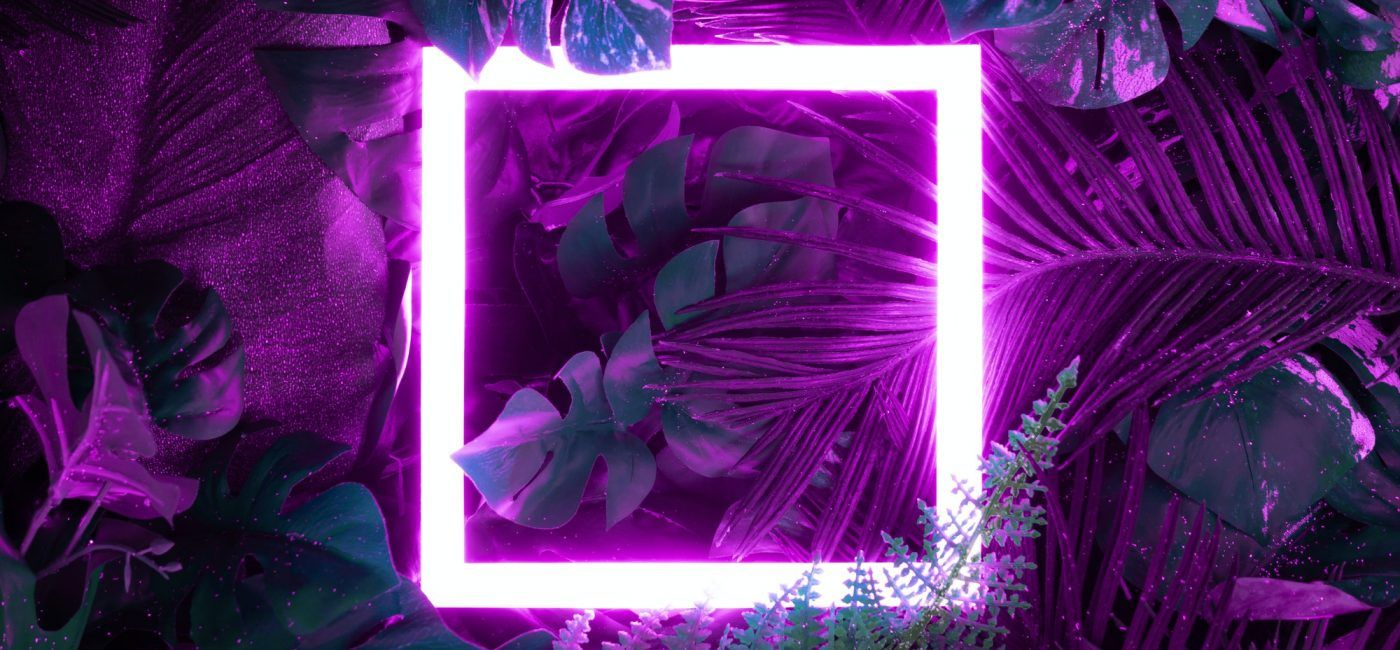 Creative fluorescent color layout made of tropical leaves with neon light square.
